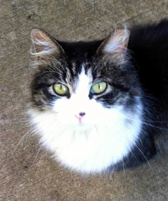 The Story Of Clover: From Outdoor Cat, To Mama Cat, To