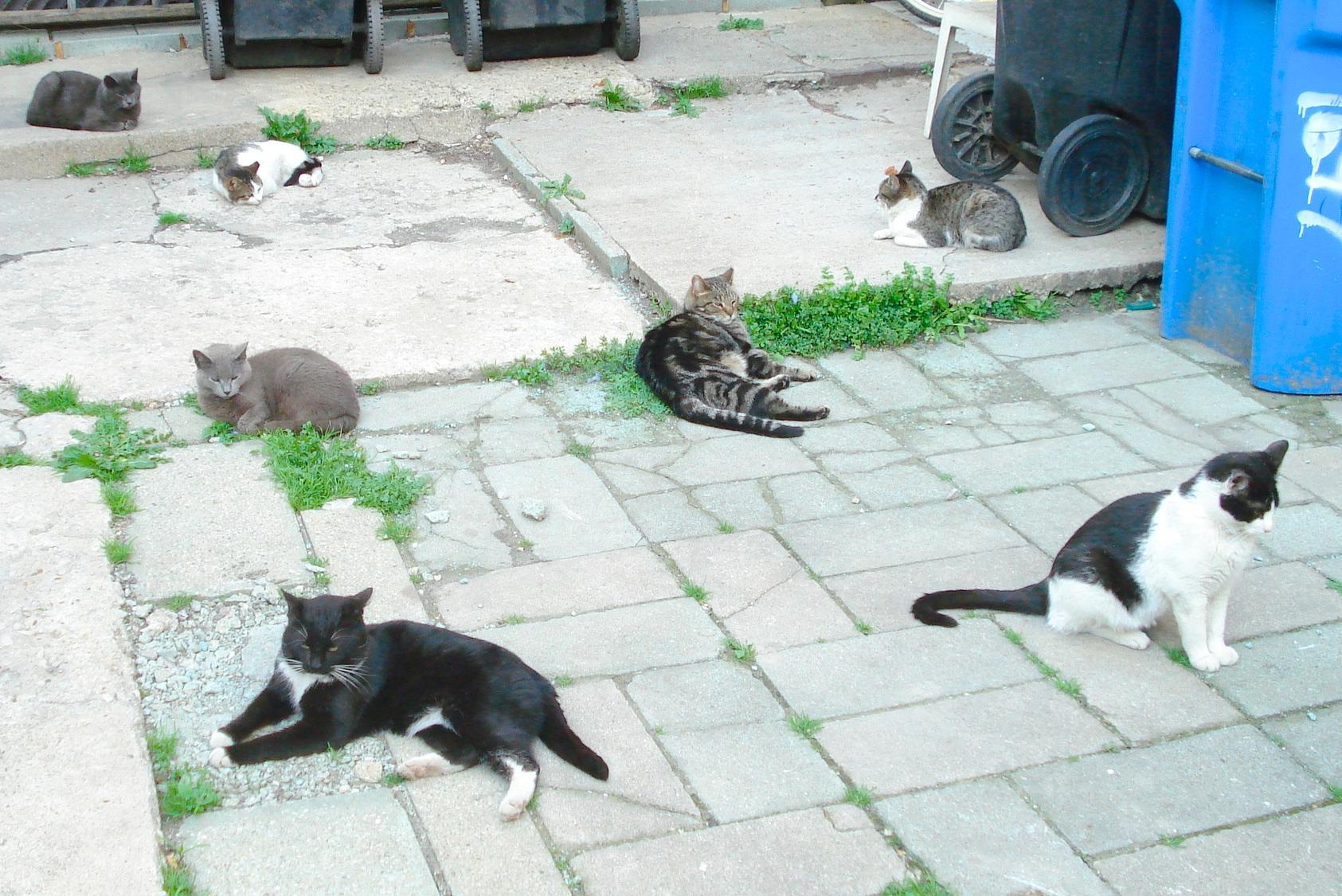 kitten store near me