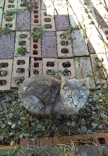 Senior Cat Stopped Eating